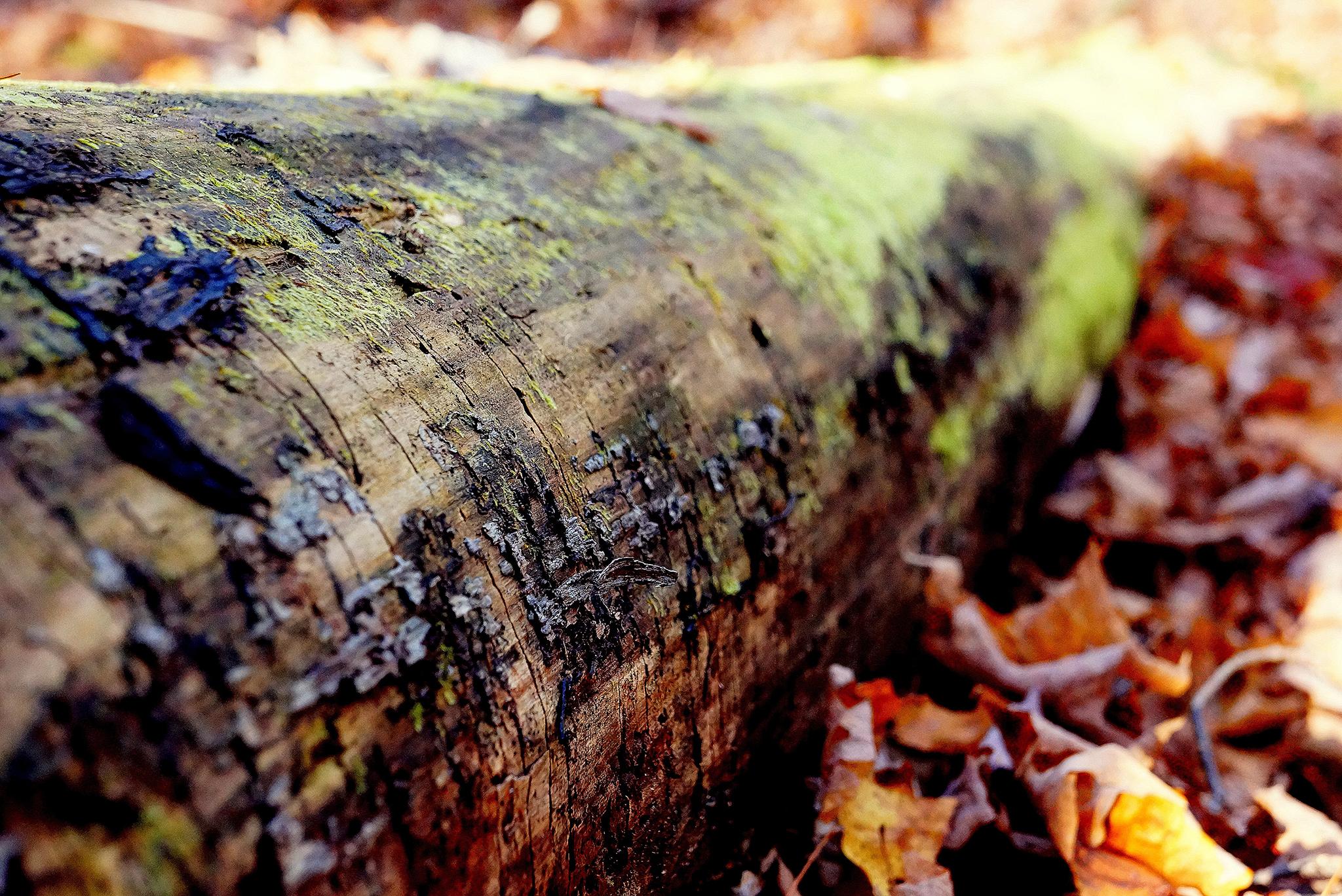 dead-tree-okstatewide